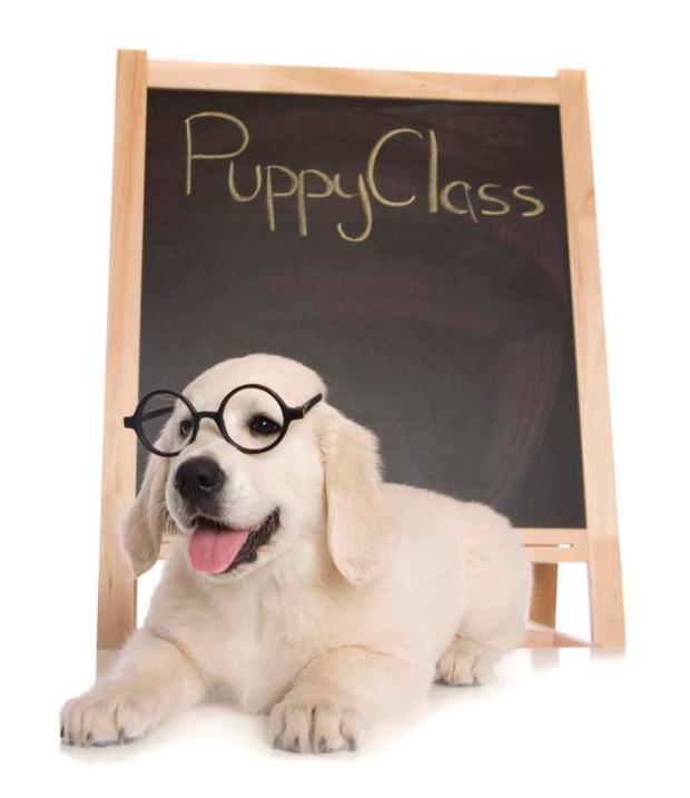 iStock_000020630787Large_Puppy_class